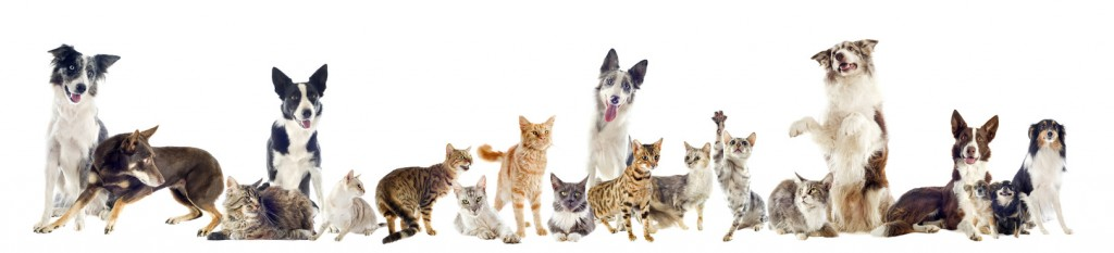 How pets fit in to your Houston estate plan
